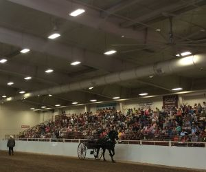Draft Horse Hitch Show Continues to Draw Large Crowds