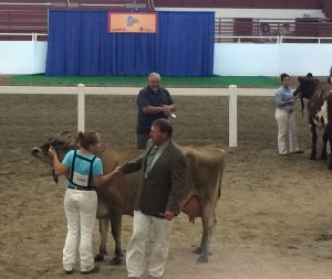 Open Class Dairy Cattle Show Kicks Off the 2015 Nebraska State Fair