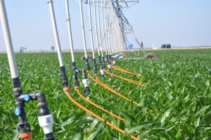 (Video) Mobile Drip Irrigation Seeking Foothold in Western Kansas