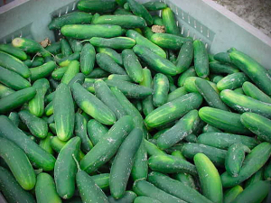 Cucumbers shipped to Kansas recalled due to salmonella