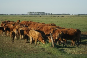 Study Shows Benefits Of 'Livestock Friendly' Designation