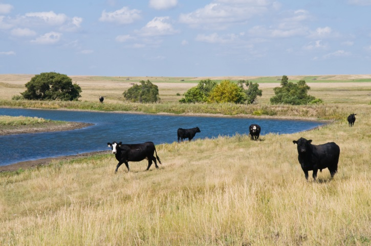 The Nebraska Ranch Practicum is Currently Accepting Applications- May 1 Deadline