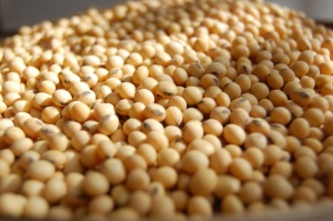 EU imports of U.S. soybeans increase by 280%