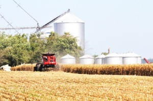 Soybean Harvest Picks Up Speed; Corn Harvest Falls Further Behind Normal