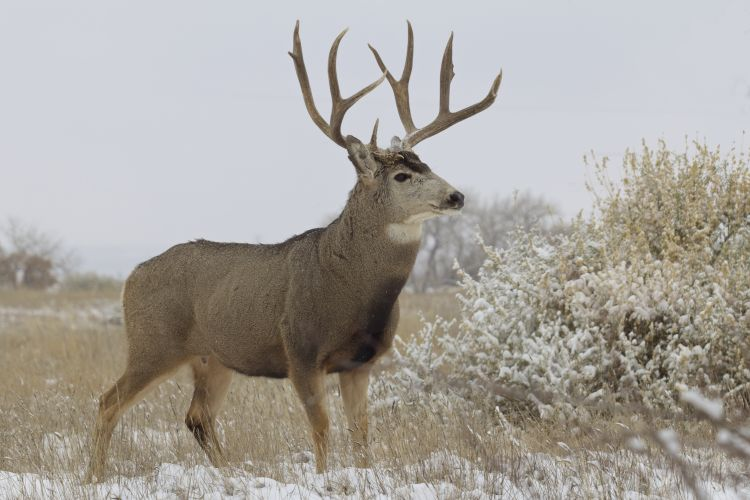 Four positives for CWD found in recent testing of deer