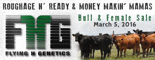 FlyingHGenetics-CattlemanSlider-Sale2016