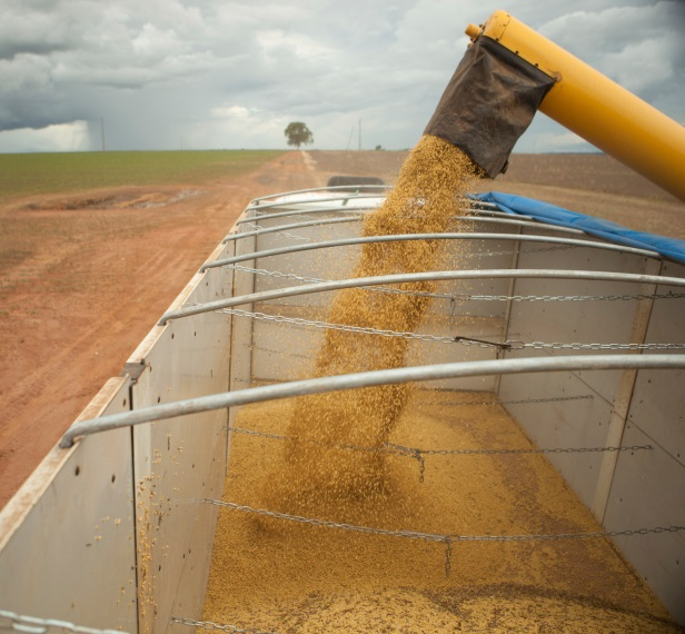 Brazil Soybean Harvest Lower but Still Solid
