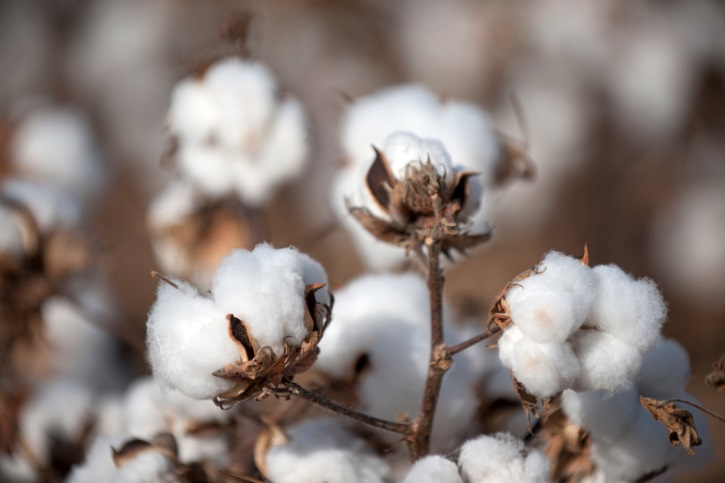 USDA Helps Cotton Producers Maintain, Expand Domestic Market