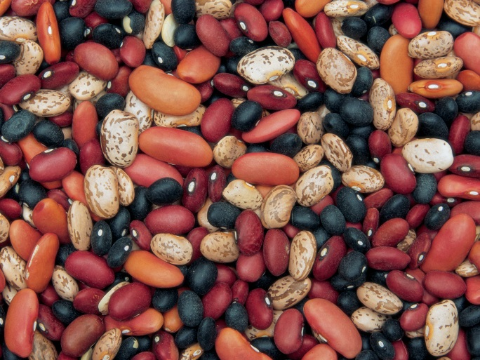 Nebraska Secretary of State and Department of Agriculture combine efforts for Nebraska's Dry Bean Industry