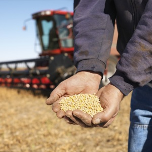 Goodbye Trans Fats, Hello High Oleic Soybeans