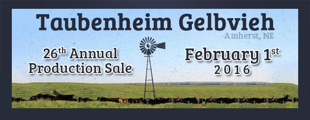 Taubenheim Gelbvieh- Cattleman Slider-Sale2016