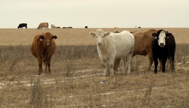 Study Shows Benefits Of 'Livestock Friendly' Designation