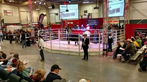 Angus Foundation Heifer and Featured Packages Raise $278,000