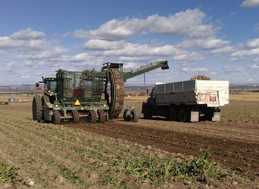 Western Sugar finishing up beet harvest