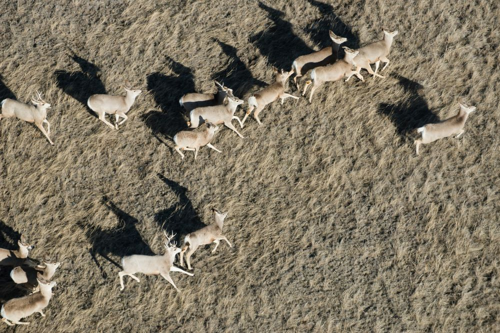 Sampling of deer results in 203 positives for CWD