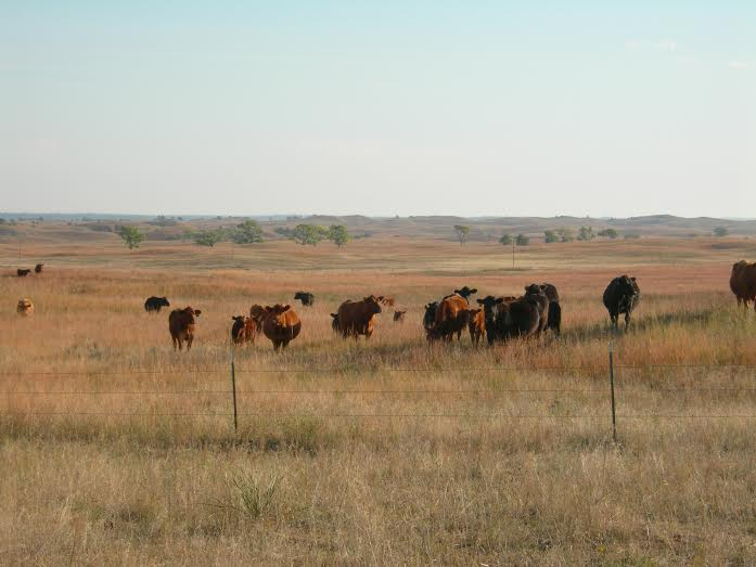 Bloomberg: Cattle Ranchers Own Worst Enemy