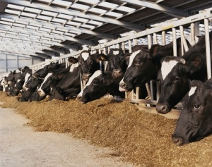 Dairy Promotion Directors Elect Board Officers