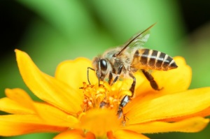 Honeybee Losses Jumped Sharply Higher Last Winter