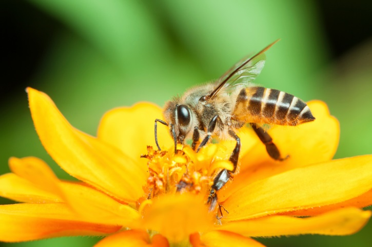 Legislation Designed to Save Pollinators Introduced in House