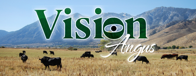 Vision Angus