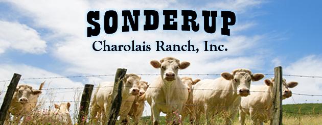 Sonderup Charolais Ranch
