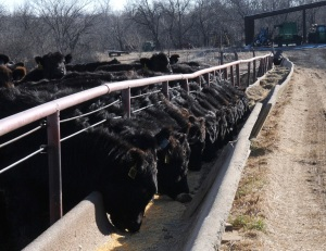 Cattle Feeders College set for May 24 in Garden City