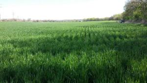 2016 HRW Wheat Tour Preview Scouts Expect Some Good Wheat Yields
