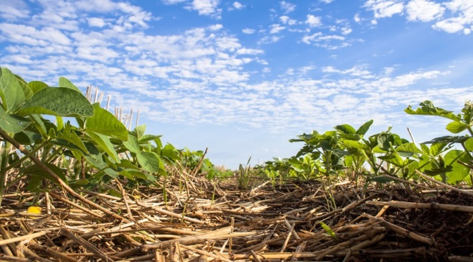 Soybeans are Brazil's major export crop. (alffoto/iStock/Thinkstock)