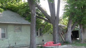High winds cause tree to fall on Gering home