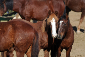 West Nile Virus Confirmed in Kansas Horse