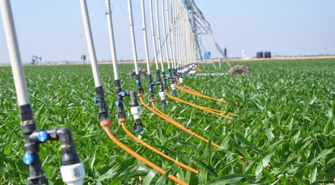 Mobile drip irrigation aims to create a more resourceful way to water crops, according to Danny Rogers, professor of biological and agricultural engineering at Kansas State University. (Image courtesy of KSU)