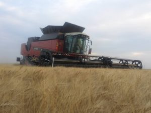 Harvest Moving Fast in Western Kansas