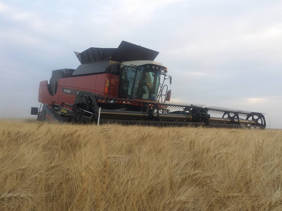 Final Kansas Wheat Report Shows Crop's Resiliency
