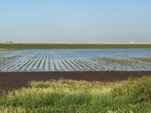 Farm Groups Defend Crop Insurance Budget