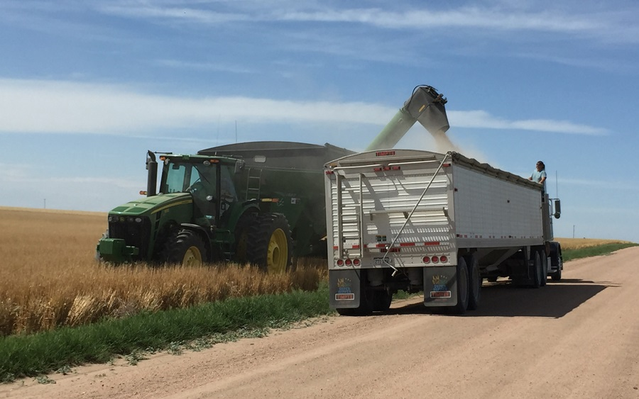 Price Slump to Curb U.S. Wheat Acres While Russia Expands