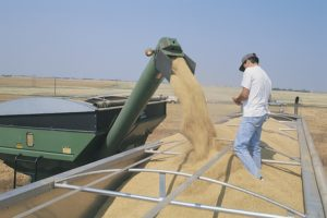 Nebraska Wheat Harvest Wrapping Up