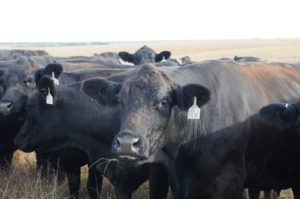 Certified Angus Beef LLC to receive Don L. Good Impact Award