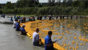 Final push underway to sell ducks for United Way