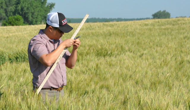 Scouts will measure the potential yield, quality and growth stage of the spring wheat crop in the Northern Plains on the 2016 Hard Red Spring Wheat and Durum Tour this week. (DTN photo by Emily Unglesbee)