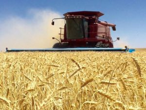2018 Hard Red Winter Wheat Harvest Nearing the Finish Line
