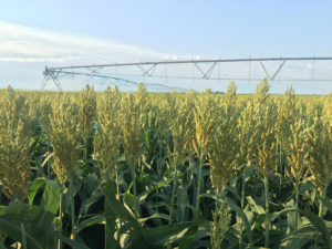 Governor Ricketts Makes Appointments to Sorghum Board- Officers Elected