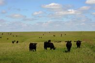 Ranchers Encouraged to Apply for Demonstration Ranch Funding