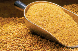 Vietnam Growing Importer of Soybean Meal