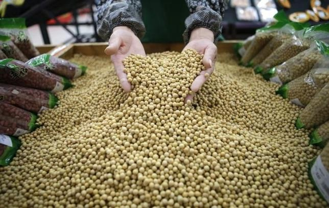 U.S. Soy Losing Ground to Brazil in China