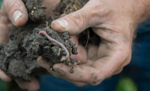 Soil health to be highlighted at agronomy meeting in Oswego, Kansas