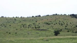USDA Expands Grasslands Conservation Program to Small-Scale Livestock Producers