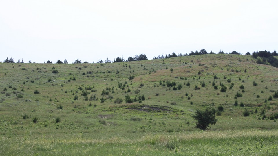 Rancher: States, not feds, should manage range lands in West