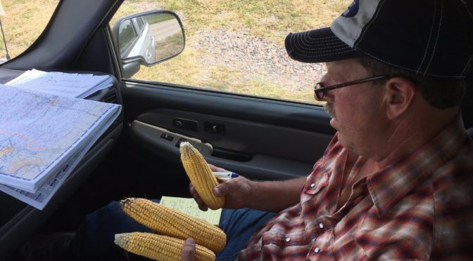 Tim Gregerson from Herman, Neb., looking at corn lodging. He is on the Pro Farmer crop tour just south of Dennison, Iowa. Photo courtesy of Ben Nuelle, IA Agribusiness Radio Network.