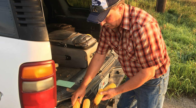 Tim Gregerson from Herman, NE, checking corn length in Hamburg, IA. He is a tour participant on the West Leg. Photo by Ben Nuelle, IA Agribusiness Radio Network.