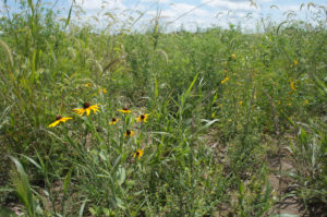 USDA Again Temporarily Suspends Continuous CRP Signup
